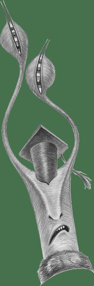 Snail graduate, in graduation cap